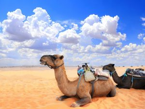 3-day desert tour from Fes to Marrakech in Morocco