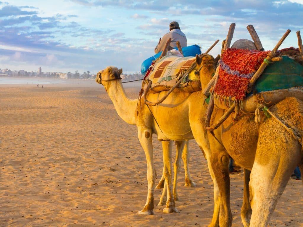 Camel ride Essaouira Morocco