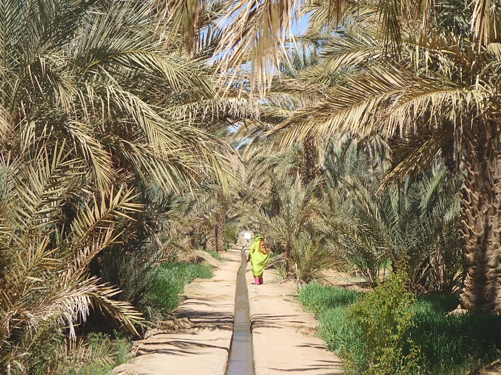 Hassilabied Oasis Morocco