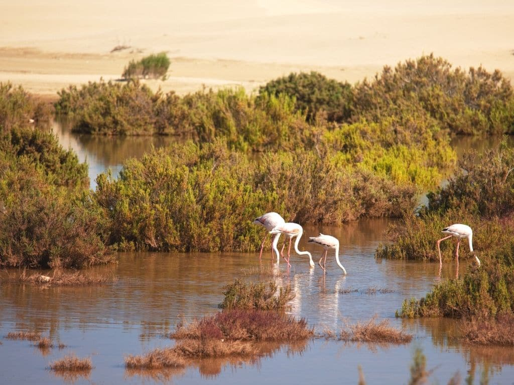 Souss-Massa National Park in Morocco