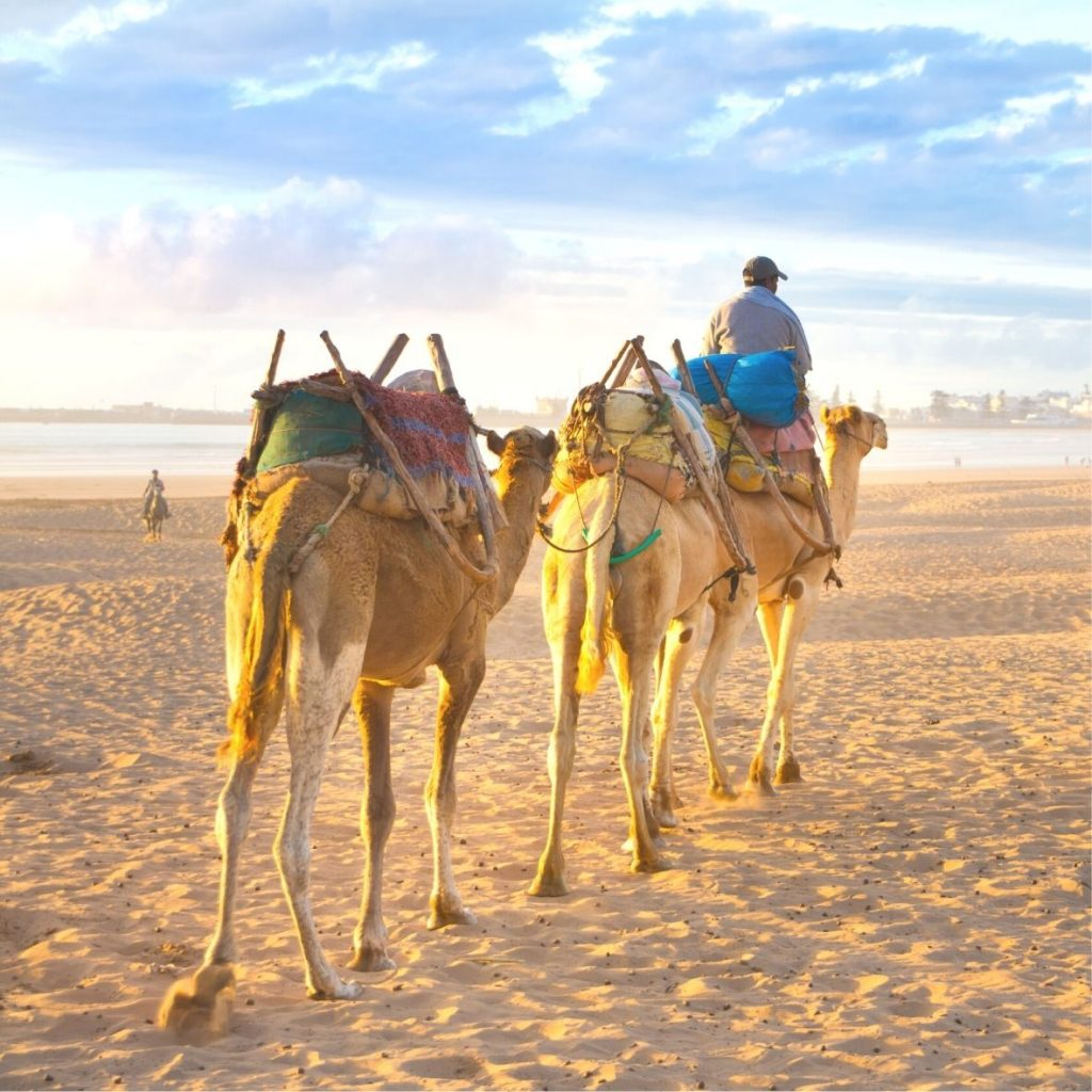 BEACH CAMEL RIDES IN MOROCCO
