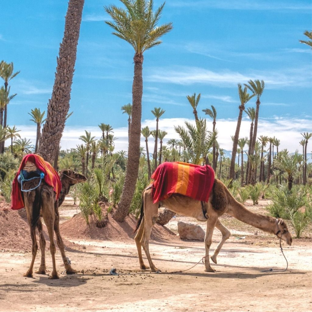CITY CAMEL RIDES IN MOROCCO