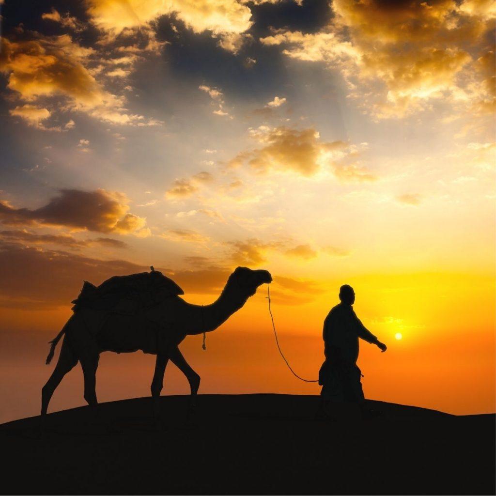 Camel trekking Zagora