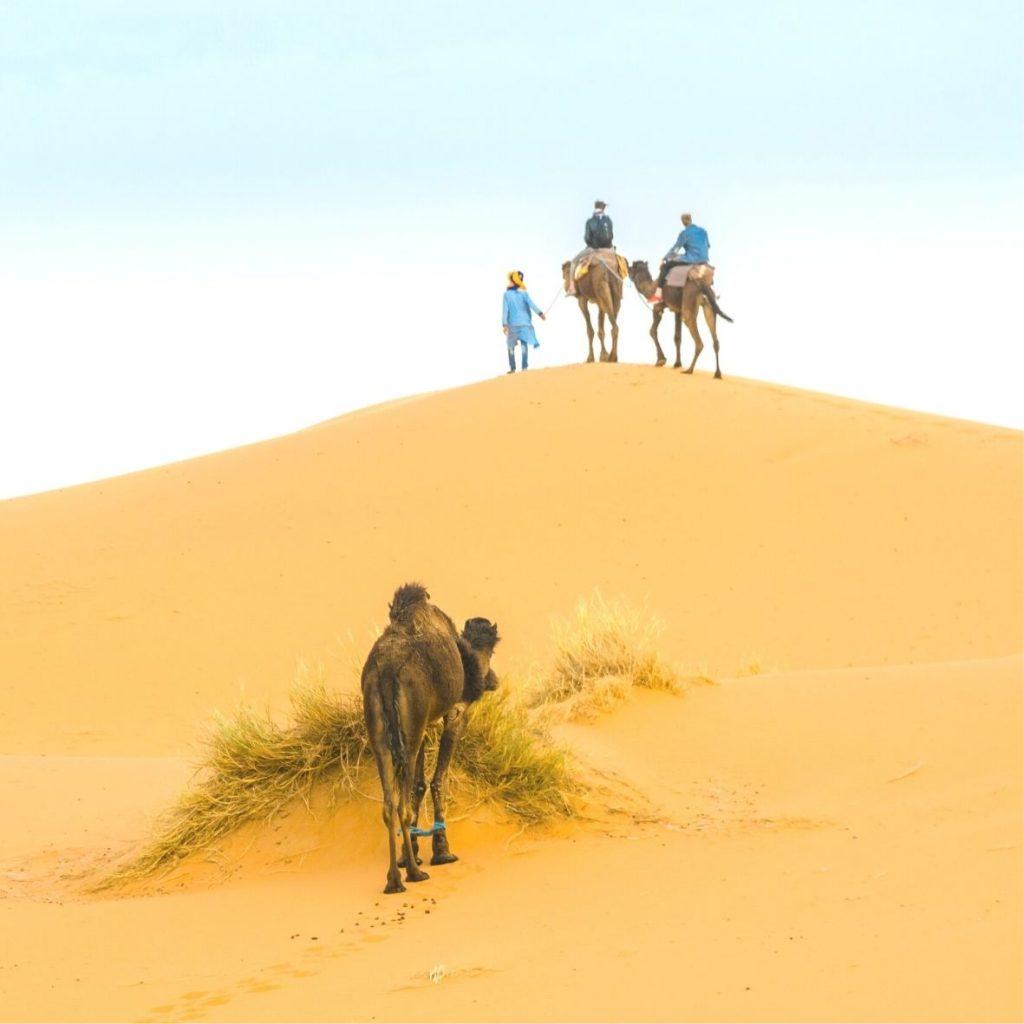 DESERT CAMEL RIDES IN MOROCCO